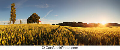 Sunset over wheat field with path and chapel in Slovakia -...