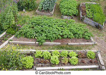 Raised beds of various vegetable plants potatoes - Neat...