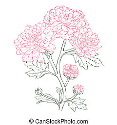 Vector chrysanthemum flower - Vector chrysanthemum flower in...