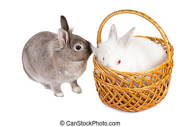 Two cute little rabbit friends, with the fluffy white one...