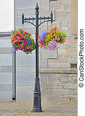 Hanging Flower Basket shoot in summer time