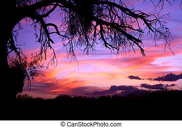 Mesquite Tree - Tucson Sky