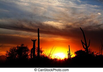 Saguaro Sunset - Tucson Mountains