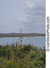 Bonaire coastline - Ocean and plants on coastline of Bonaire