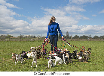 girl and chihuahuas - portrait of a woman and a large group...