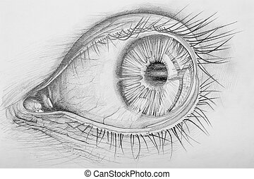 Eye - Pencil Drawn Anatomy Of A Human Eye