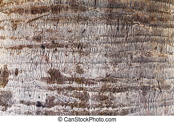 Palm tree bark - Close up Tree bark background