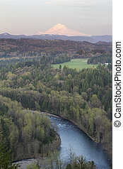 Sunset Light on Mount Hood - Sunset Alpenrose Pink Light on...