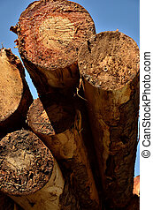 View from under a load of logs - A view from behind and...