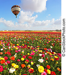 Over the blossoming flowers of flying a balloon