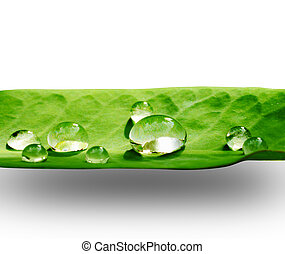 Water drops. - Close-up Water drops on a leaf.