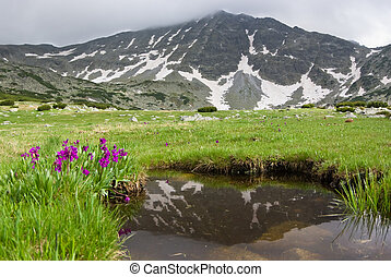 Mountain Meadow in the Balkan mountains of Rila - Bulgaria