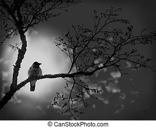In expectation of warmth - Night A moonlight To a raven is...
