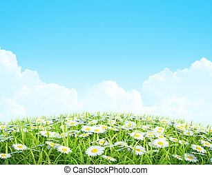Summer or spring shiny meadow Background.
