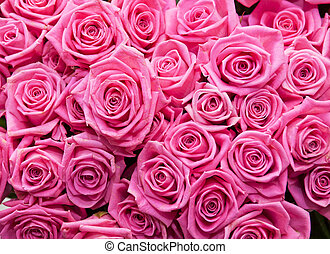 roses background - pink natural roses background