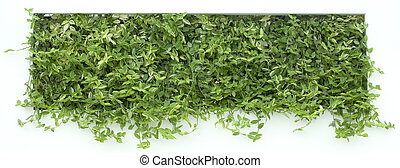 Vertical Garden Cutout - Vertical Garden of Green Creeper...