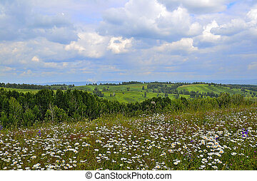Summer Landscape with daisies - Summer landscape with lot of...