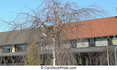 birch tree villa house - closeup of birch tree without...