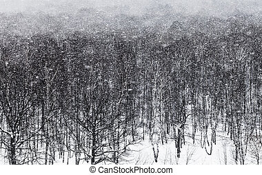 snow blizzard ander oak forest - snow blizzard under oak...