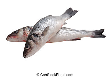 raw seabass - whole fresh fish isolated on wihte background....
