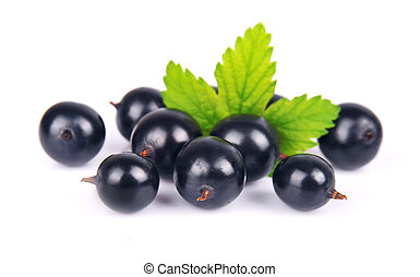 Black currants with leafs on white