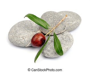 olive branch on stones closeup on white