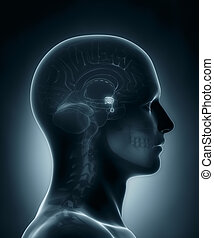 Pituitary gland medical x-ray scan