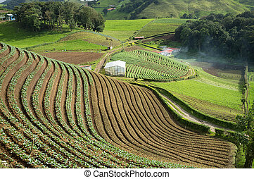 Agricultural terraces - A terraced plantation in inland...