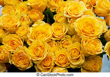 roses background - yellow natural roses background