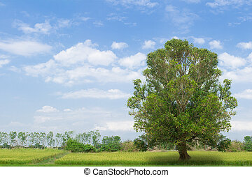 Grass fields with tree against a blue sky