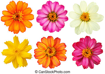 Collection of flower - Collection of flowers on a white...