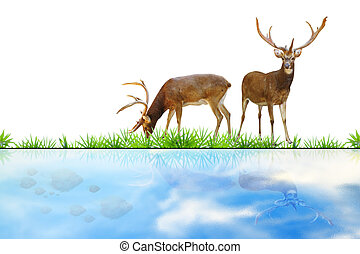 Abstract deer. - Abstract deer eating grass on white.