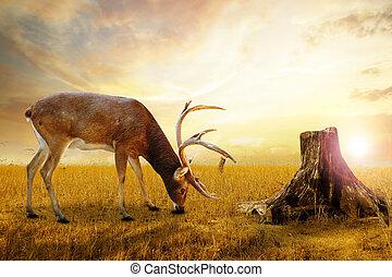 Abstract deer. - Abstract deer grazing in the meadow.