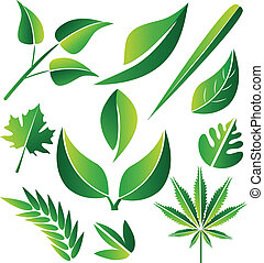 Set of green stylized leafs designs - Set of green stylized...
