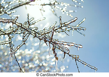 icy tree branches in the sunlight - icy tree branches...