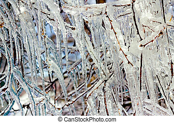 icy tree branches close-up