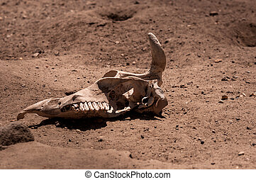 Remains of a dead animal in the sand closeup photo