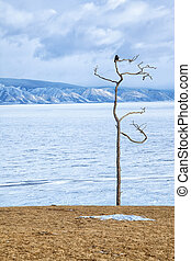 Winter Baikal landscape with crow on tree, Olkhon steppe,...