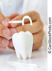dentist holding dental floss with molar, flossing teeth...
