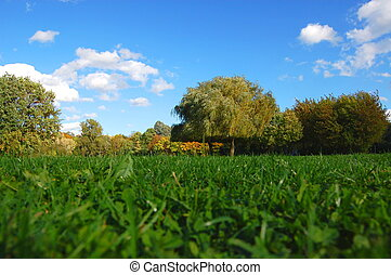 forest and garden under blue sky at fall