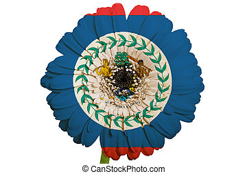gerbera daisy flower in colors national flag of belize on white background as concept and symbol of love, beauty, innocence, and positive emotions