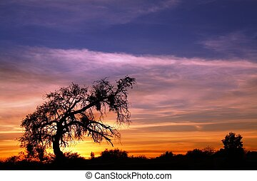Mesquite Sunset - The old Mesquite has seen its share of...