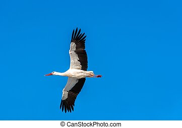 Stork at winter on the sky