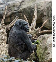 Black gorilla with her baby