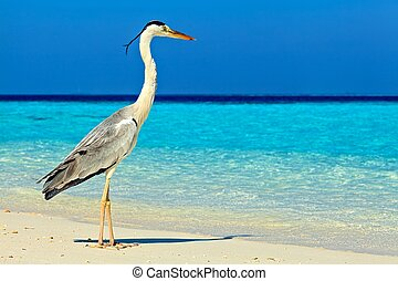 Bird is on the morning beach, Maldives, The Indian Ocean