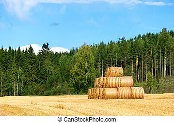 Field with hay rolls