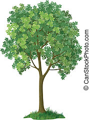Chestnut tree. Vector - Chestnut green tree, isolated on...