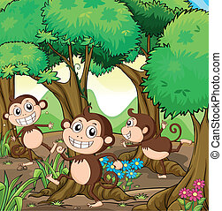 Three monkeys playing at the forest