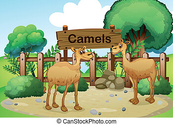 Two camels inside the wooden fence with a wooden sign board...