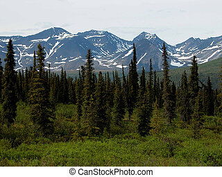 Along Denali Hwy - Alaska - Mountains and sitka-spruce trees...